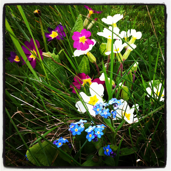 Spring flowers in the border midsummercottage.co.uk 600