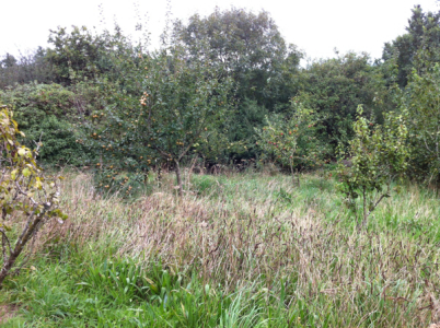 midsummercottage-co_-uk-2013-09-30-16-02-04-600